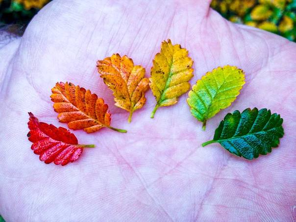 Leaves in all the colours of autumn.