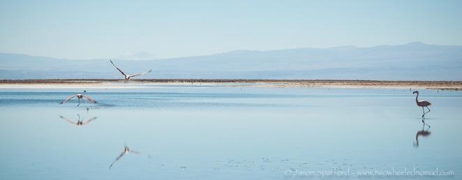 Flamingos on Laguna Chaxa.