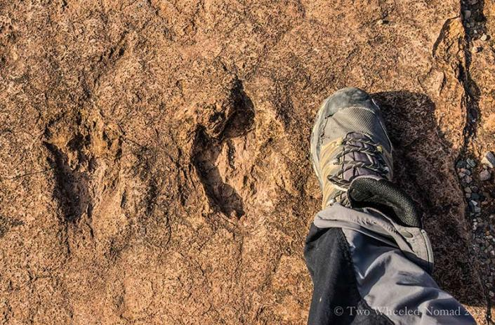 A classic three-clawed footprint, courtesy of a theropod meaning 'beast footed'.