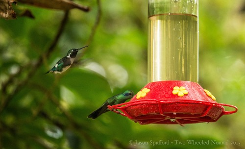 I love the thrumming of the hummingbird's wings.