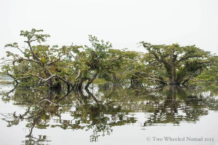 Flooded forest in the Amazon