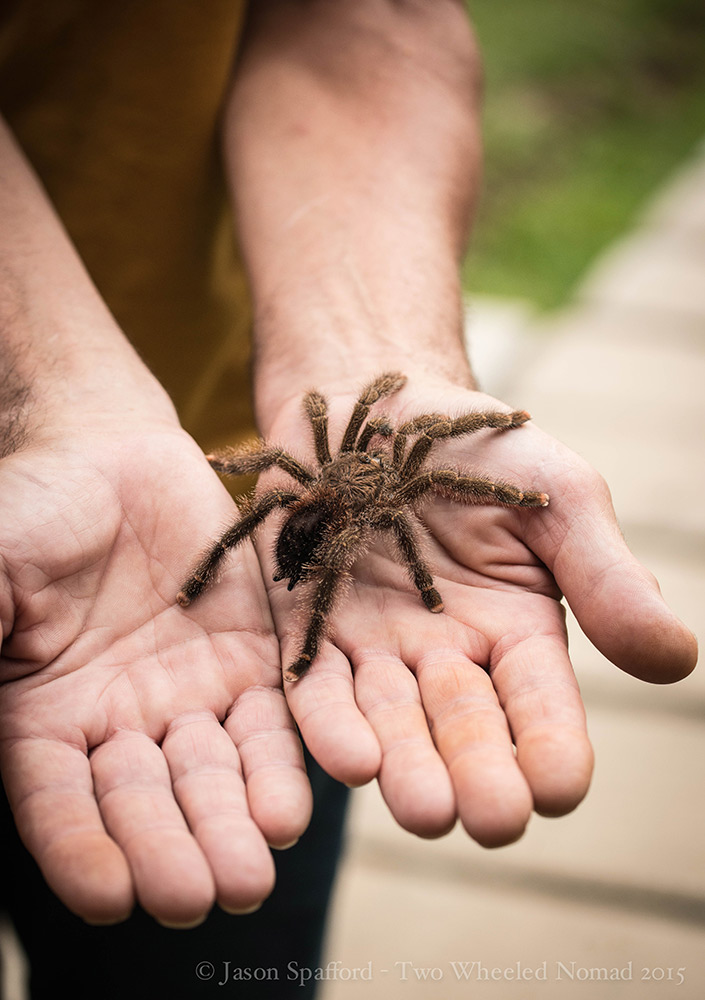 A tactile tarantula, this fella was so friendly...who knew?
