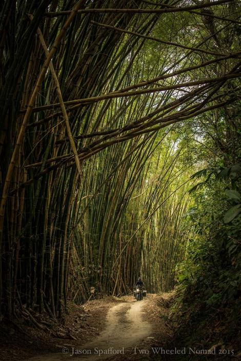 A visit to Bamboo Road en route to La Victoria, an organic coffee plantation in Minca