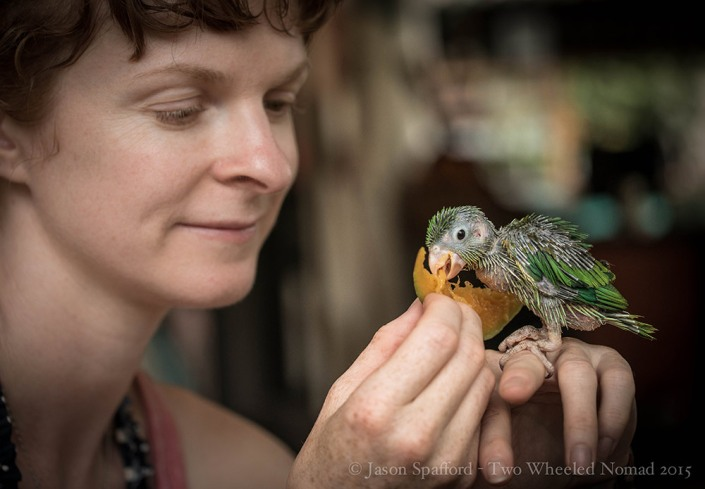 Feeding baby Orphaned Parrots at Rancho Relax