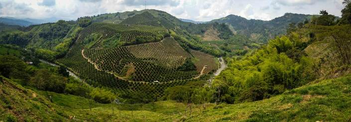 The coffee bobbled landscape of Colombia