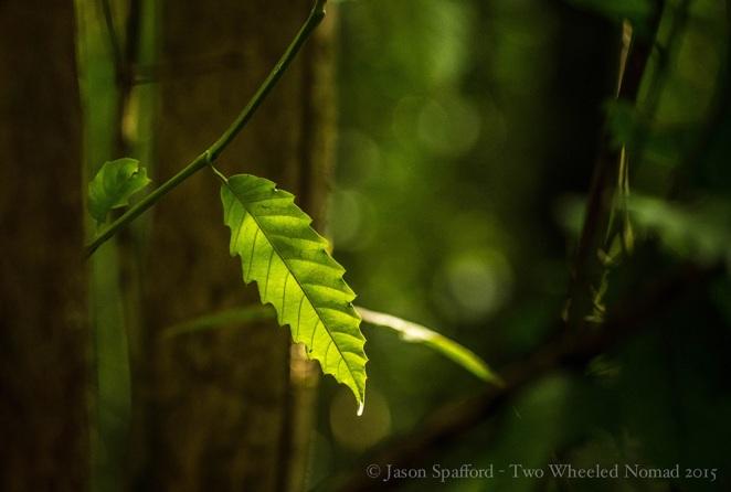 A pensive ponder through the rainforest at Rio Piro