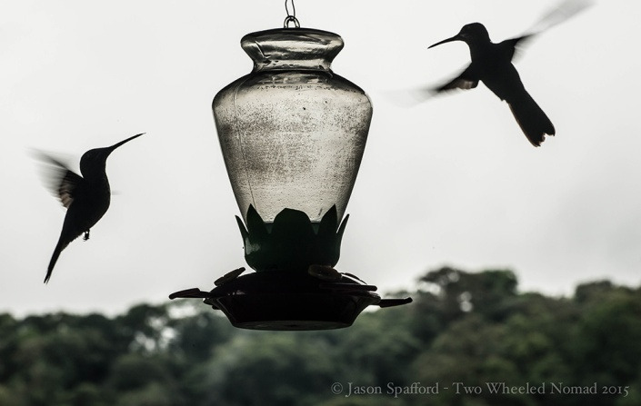 Hummingbirds are my favourite winged creature