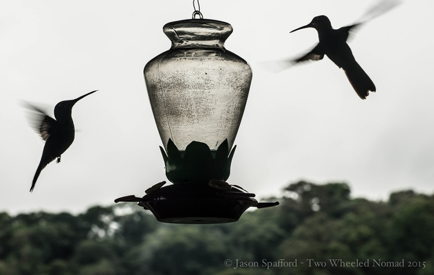 Hummingbirds - what's not to love?