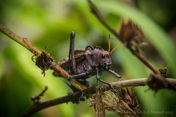 A wee grasshopper in the back garden at Camping Maria