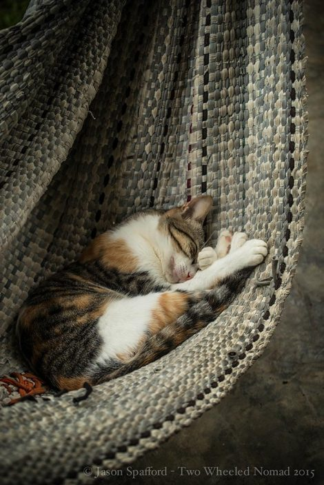 For every weary traveller, there's a lazy cat hogging a hammock