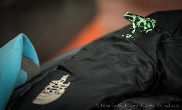 A black and green poison dart frog perched on Jason's jacket