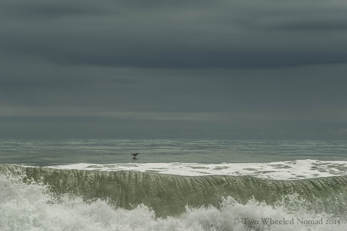 Bird on the water, Playa Negra