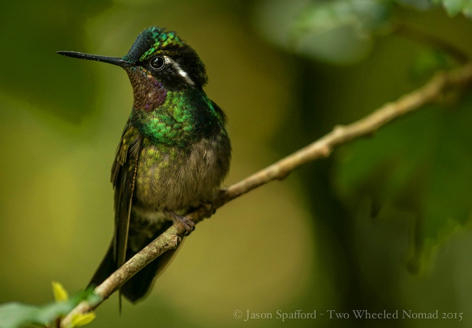 What's not to love about hummingbirds?!