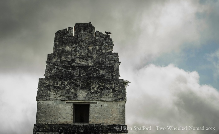 Black vultures perched on the top of one of the temples at Tikal.