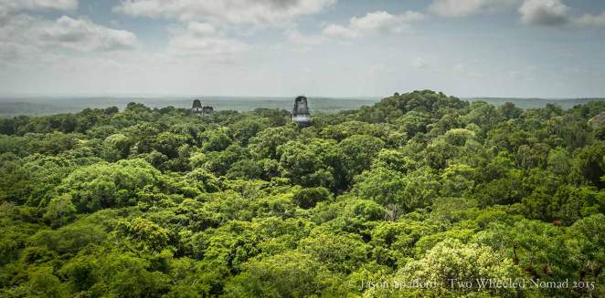 The lush jungle at Tikal National Park is breathtaking.