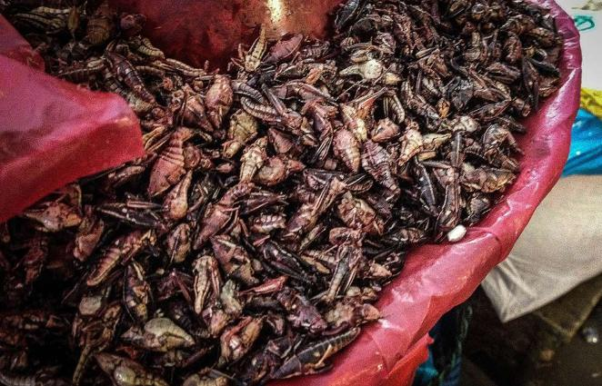 The rather crunchy, lightly salted grasshoppers. Tasty!