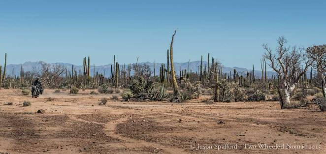 Baja: the cactus garden of Mexico