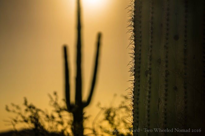 Sometimes, the things that prickle will most pique your interest. (Organ Pipe Cactus National Monument, AZ.)