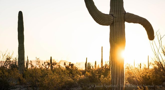 The last of the sun's smile. (Organ Pipe Cactus National Monument, AZ.)