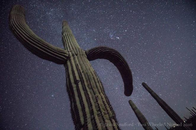 That's one big daddy. (Organ Pipe Cactus National Monument, AZ.)