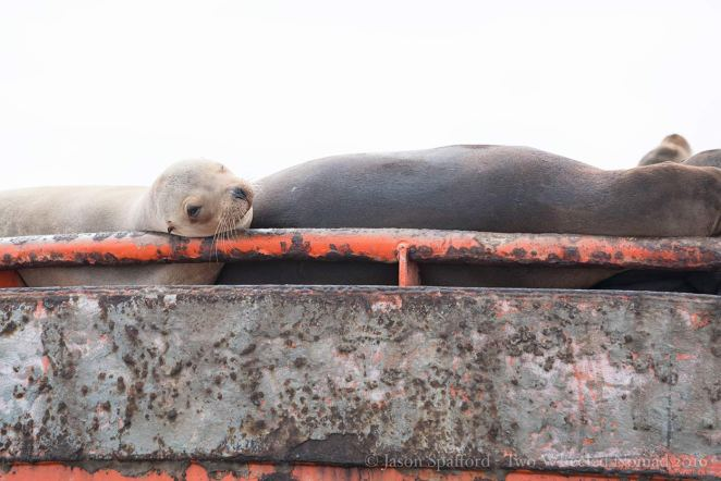 Look at the seal pup!
