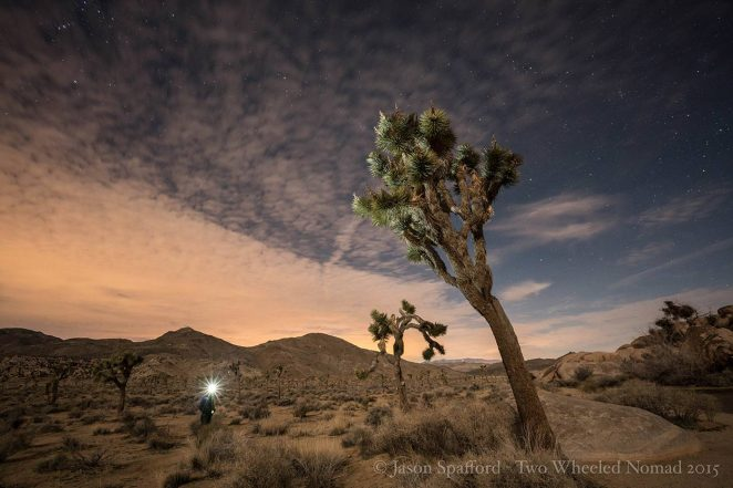 Forever chasing the stars—I've yet to be disenchanted. (Joshua Tree National Park, CA.)
