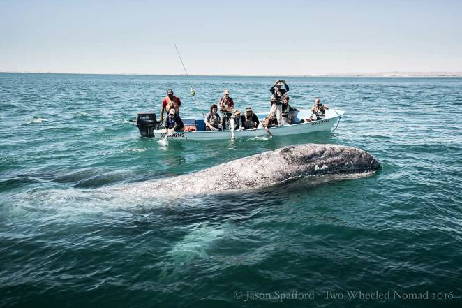 Remarkably, checking us out is a common occurrence in these waters.