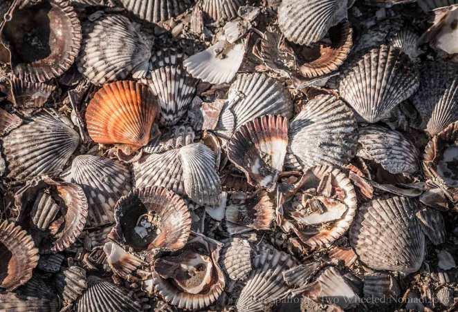 So many pretty shells at San Ignacio, we were falling over them.