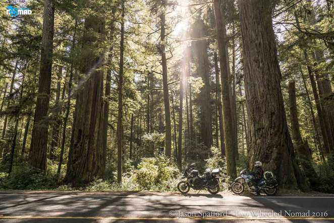 Stunning shafts of light amid the redwoods.
