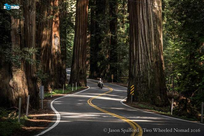 Riding through the redwoods has to be up there in a biker's fantasy.