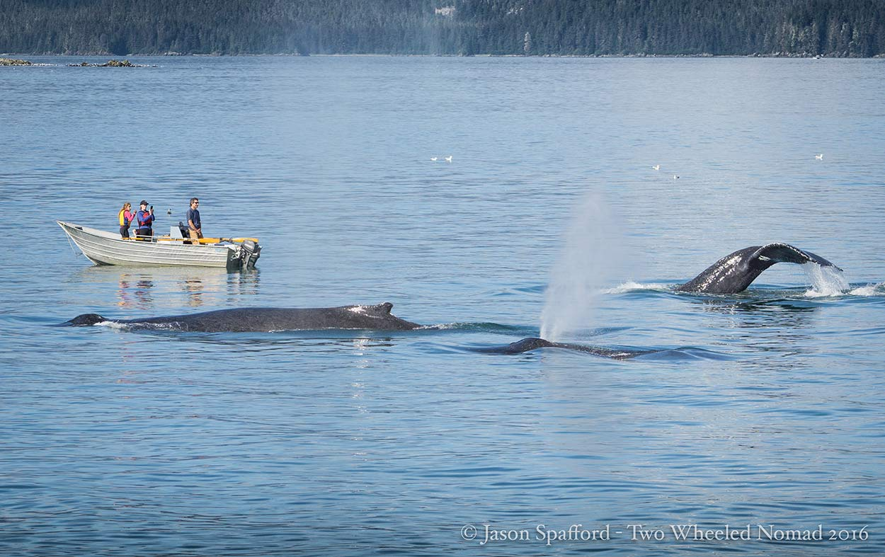 It's impossible to tire of watching whales.