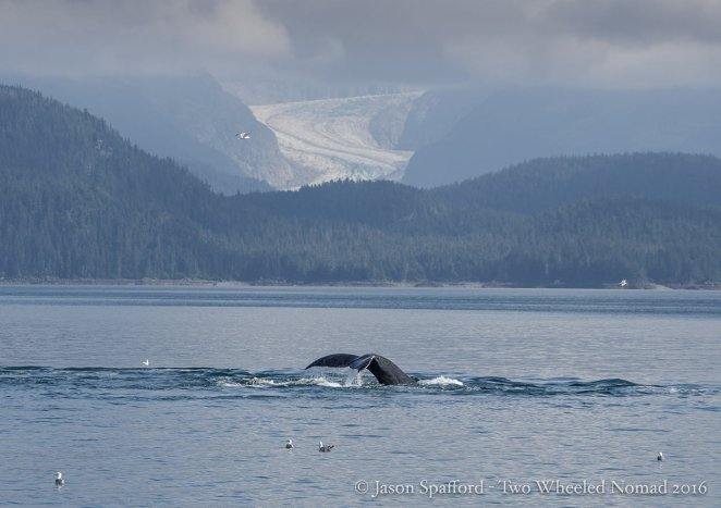 Want to tell a whale of a tale...come to Juneau.