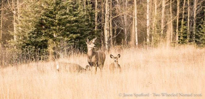 Marvelling at a small herd of timid mule deer.